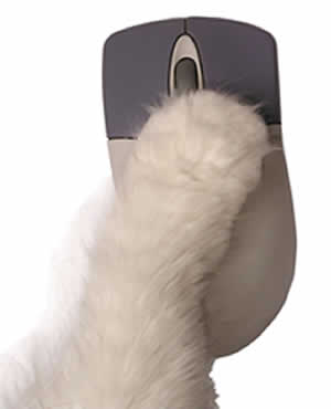 paw on computer mouse