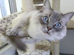 Elmtree Luxury Pet Hotel Boarding Cattery in London London