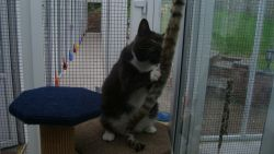 Cat welfare in Boarding Cattery