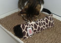 Cat comfort items from home in the boarding cattery