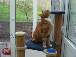 Boarding cattery view
